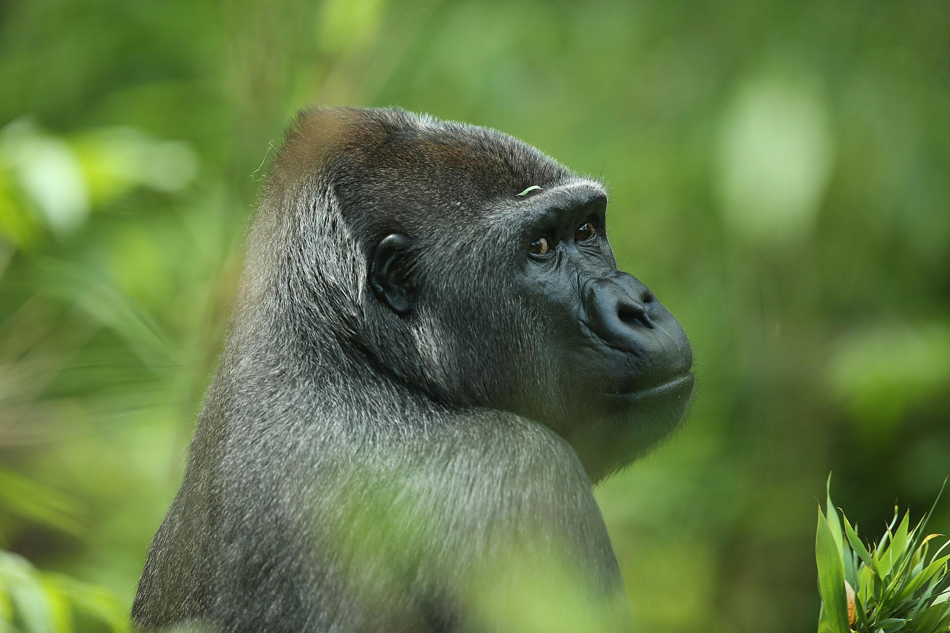 Fotoworkshop Tierfotografie – Ene Besuch im Zoo Kölle