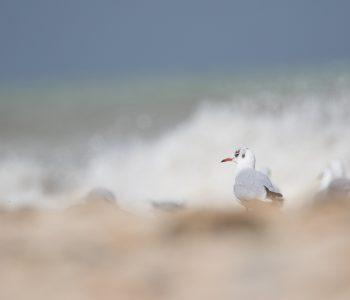 dieses Foto zeigt Möwen am Strand