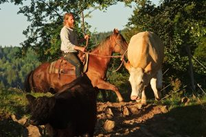 Fotokurs Pferdefotografie
